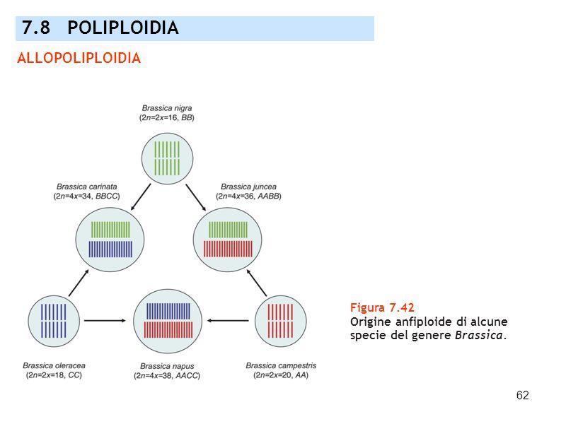 7.8 POLIPLOIDIA ALLOPOLIPLOIDIA Figura 7.42