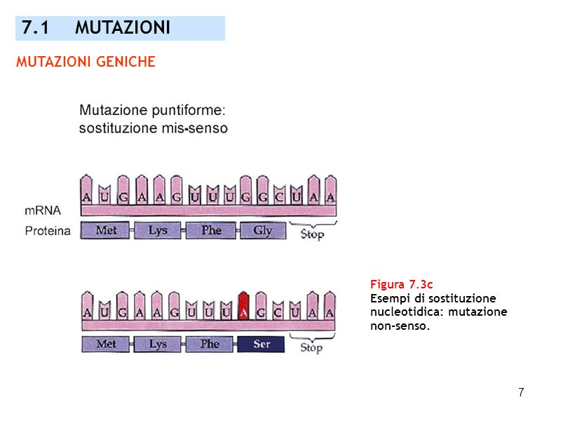 7.1 MUTAZIONI MUTAZIONI GENICHE Figura 7.3c Esempi di sostituzione