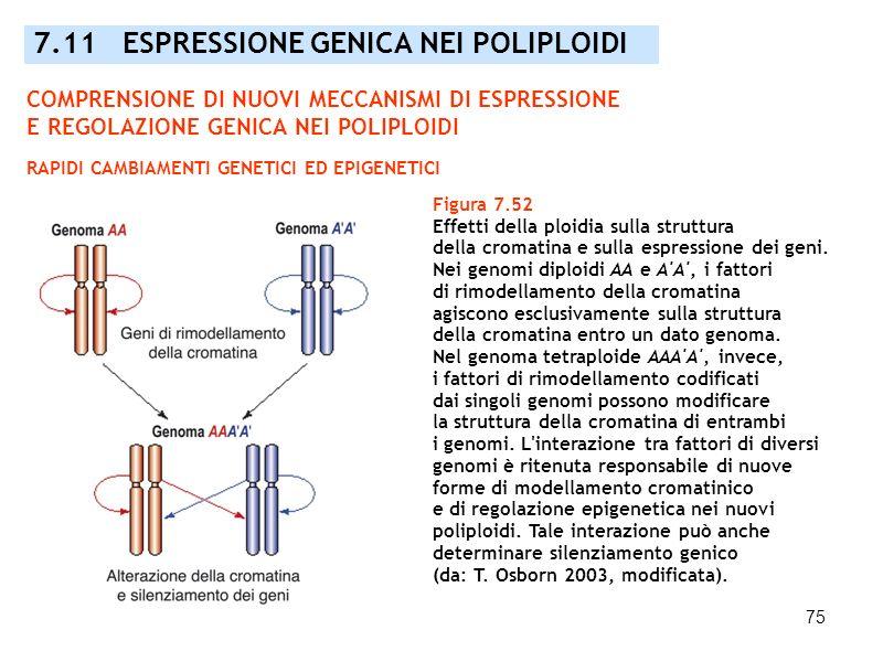 7.11 ESPRESSIONE GENICA NEI POLIPLOIDI