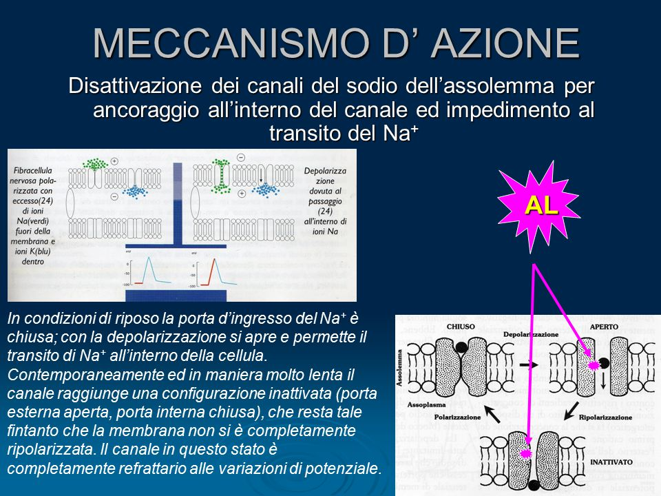 MECCANISMO D' AZIONE AL