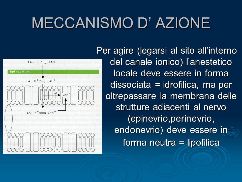 MECCANISMO D' AZIONE