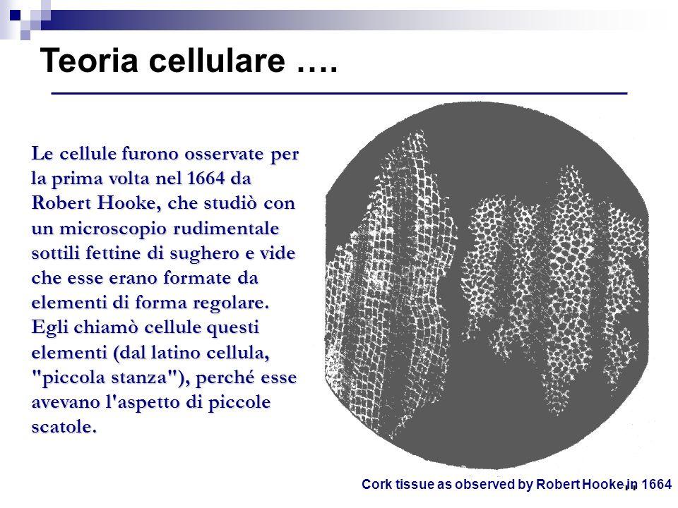 Teoria cellulare ….