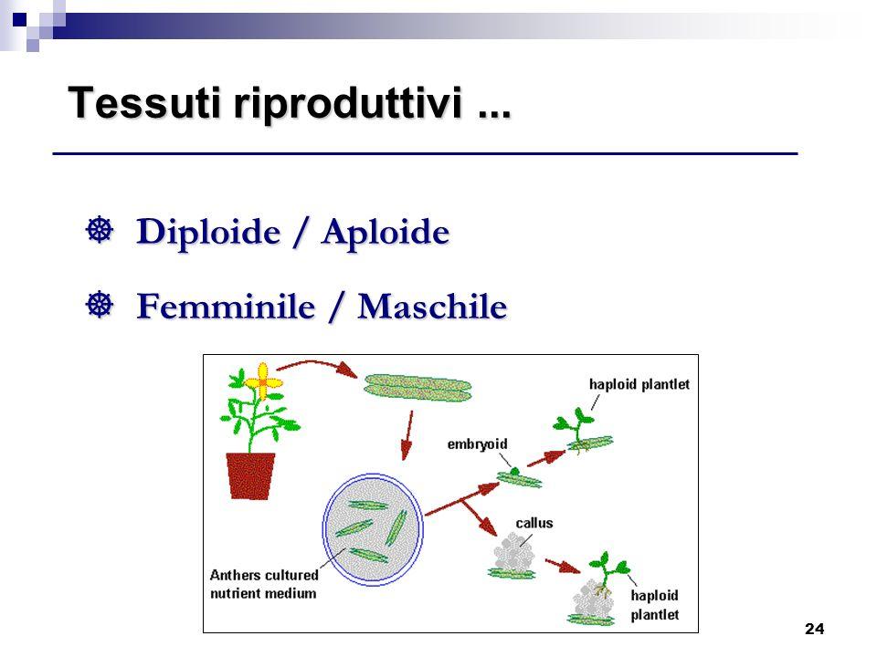 Tessuti riproduttivi ... Diploide / Aploide Femminile / Maschile