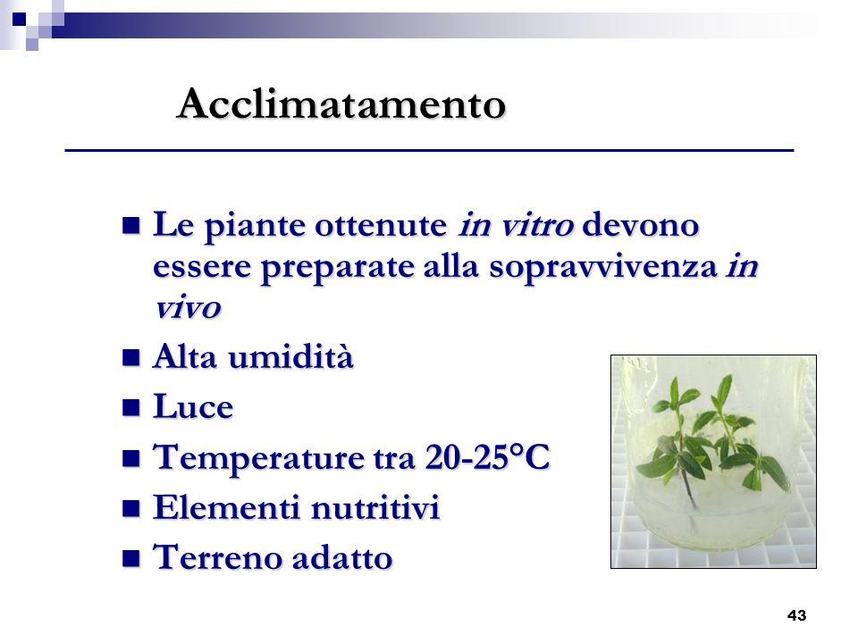Acclimatamento Le piante ottenute in vitro devono essere preparate alla sopravvivenza in vivo. Alta umidità.