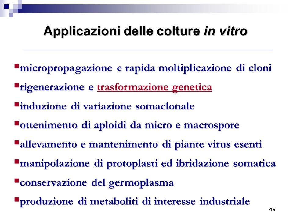 Applicazioni delle colture in vitro