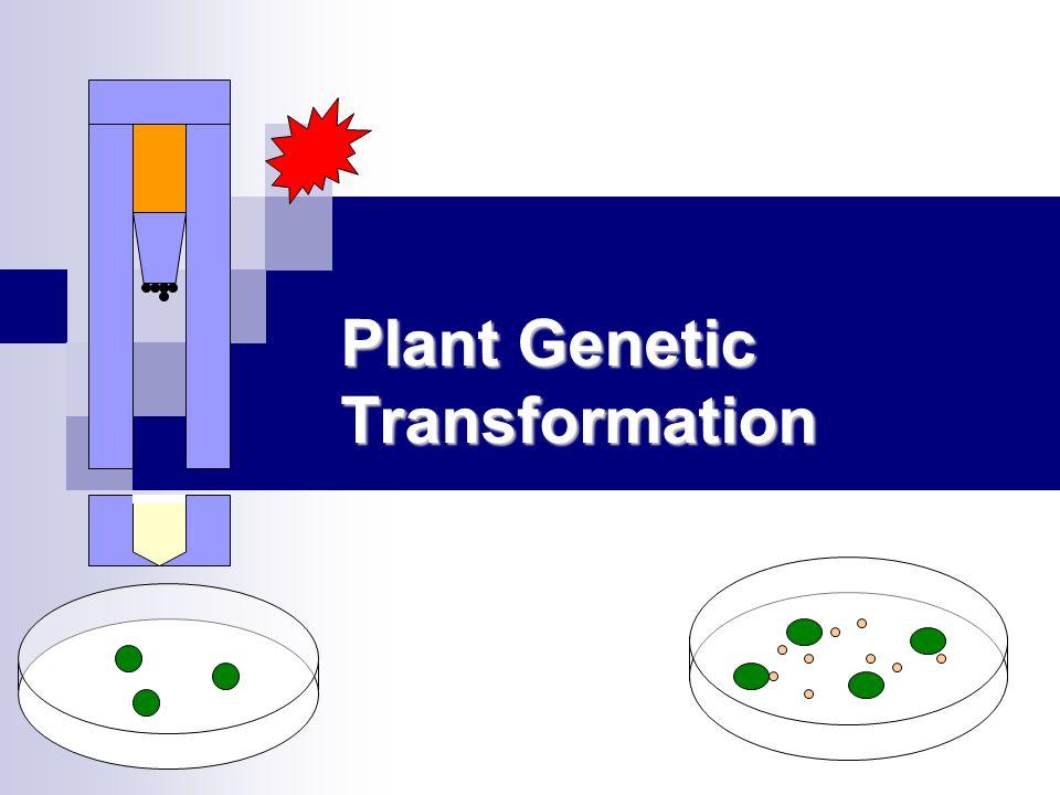 Plant Genetic Transformation