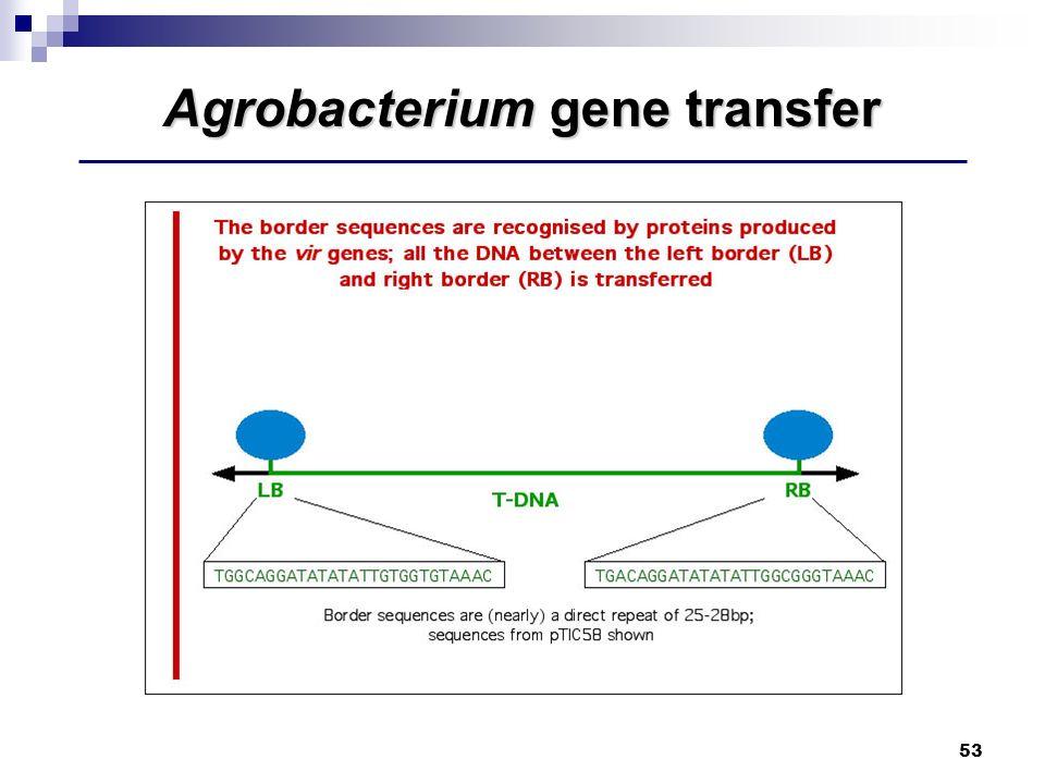 Agrobacterium gene transfer