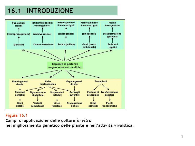 16.1 INTRODUZIONE Figura 16.1. Campi di applicazione delle colture in vitro.