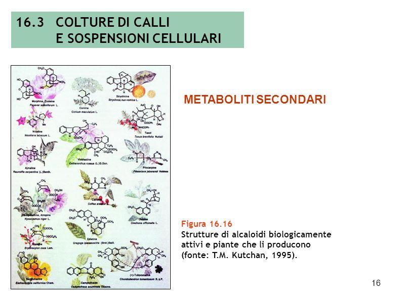E SOSPENSIONI CELLULARI