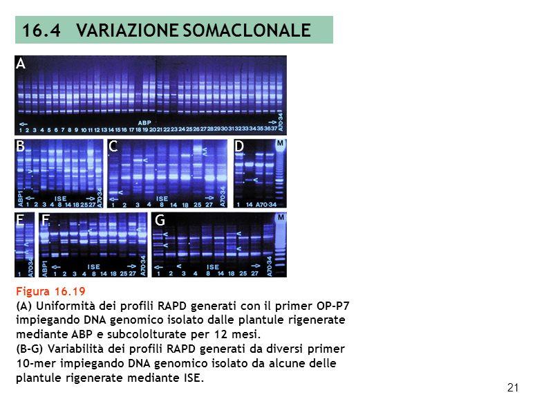 16.4 VARIAZIONE SOMACLONALE