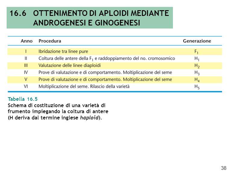 16.6 OTTENIMENTO DI APLOIDI MEDIANTE ANDROGENESI E GINOGENESI