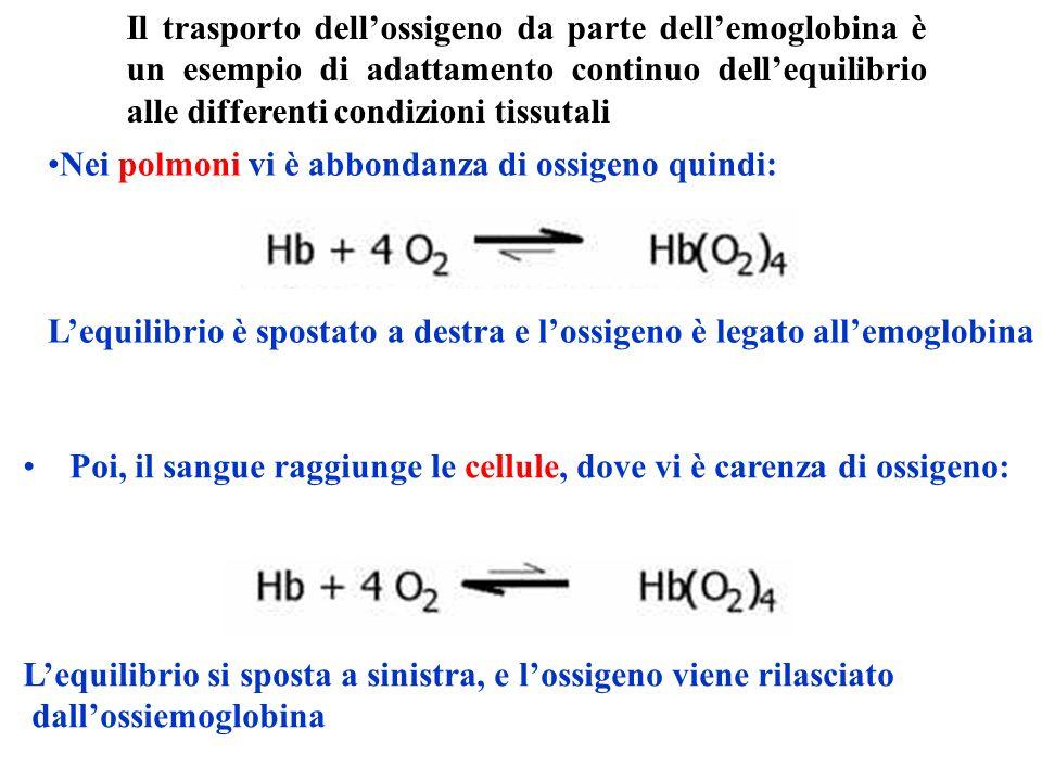 Il trasporto dell'ossigeno da parte dell'emoglobina è un esempio di adattamento continuo dell'equilibrio alle differenti condizioni tissutali
