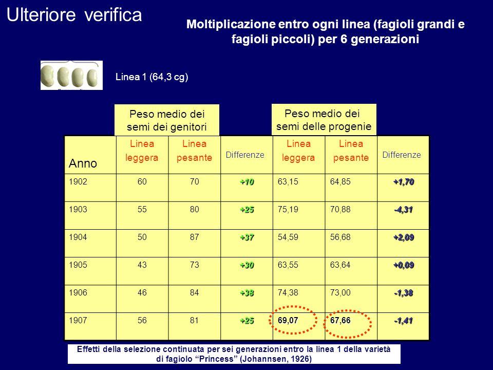 Ulteriore verificaMoltiplicazione entro ogni linea (fagioli grandi e fagioli piccoli) per 6 generazioni.