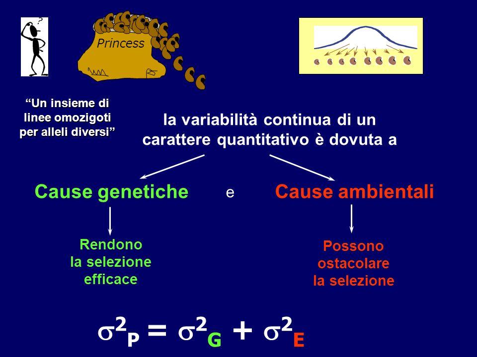 2P = 2G + 2E Cause genetiche Cause ambientali