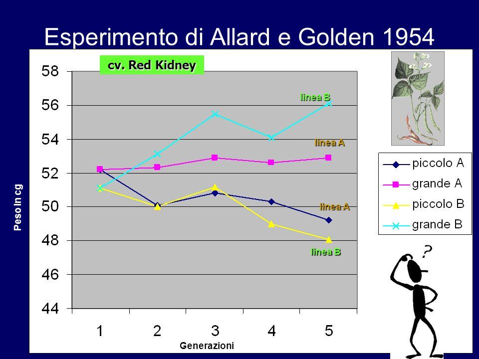 Esperimento di Allard e Golden 1954