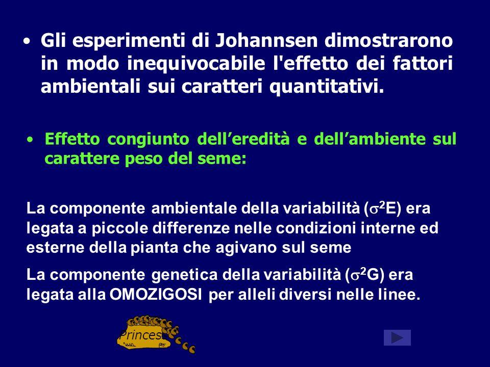 Gli esperimenti di Johannsen dimostrarono in modo inequivocabile l effetto dei fattori ambientali sui caratteri quantitativi.