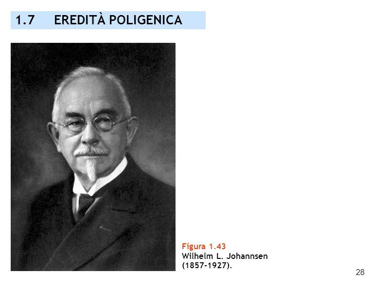 1.7 EREDITÀ POLIGENICA Figura 1.43 Wilhelm L. Johannsen (1857-1927).