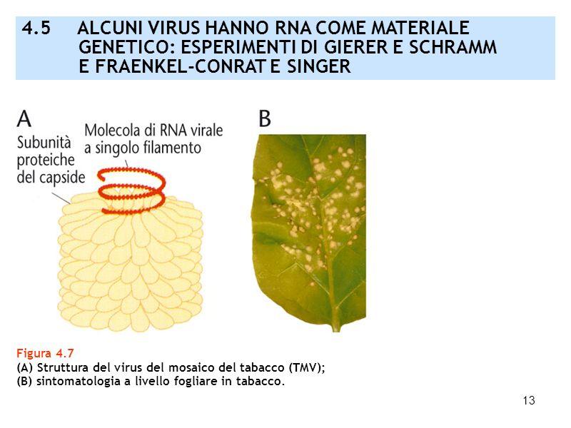 4.5 ALCUNI VIRUS HANNO RNA COME MATERIALE