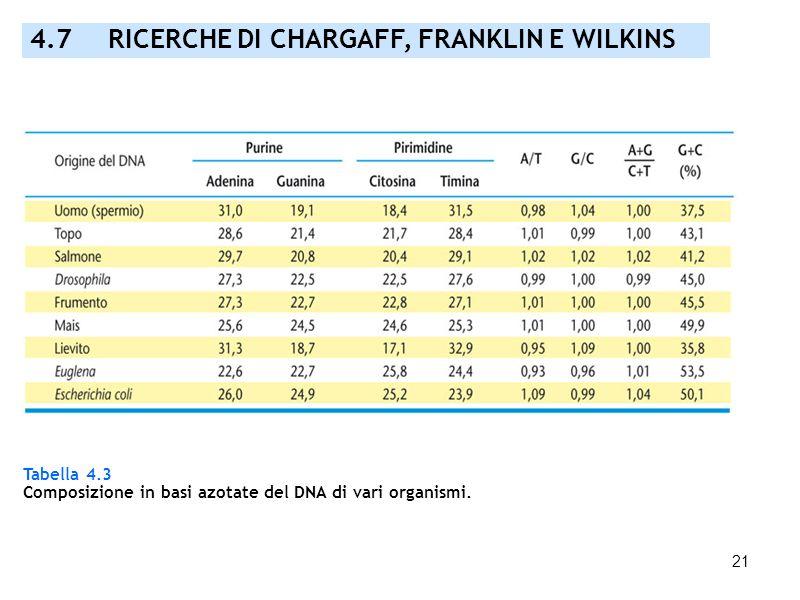 4.7 RICERCHE DI CHARGAFF, FRANKLIN E WILKINS