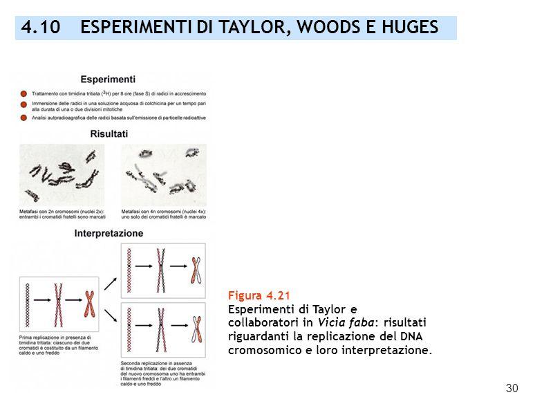 4.10 ESPERIMENTI DI TAYLOR, WOODS E HUGES