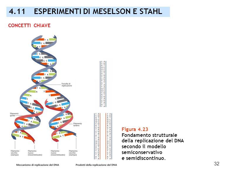 4.11 ESPERIMENTI DI MESELSON E STAHL