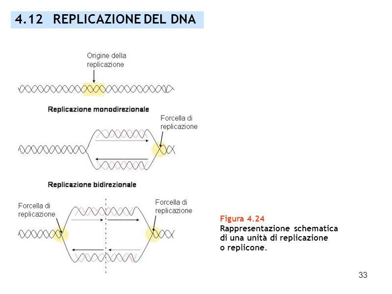 4.12 REPLICAZIONE DEL DNA Figura 4.24 Rappresentazione schematica