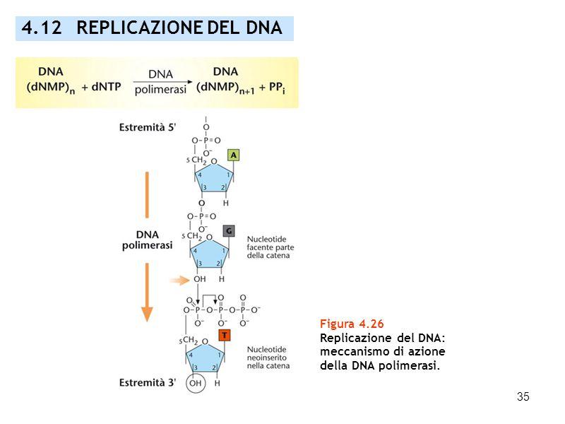 4.12 REPLICAZIONE DEL DNA Figura 4.26 Replicazione del DNA:
