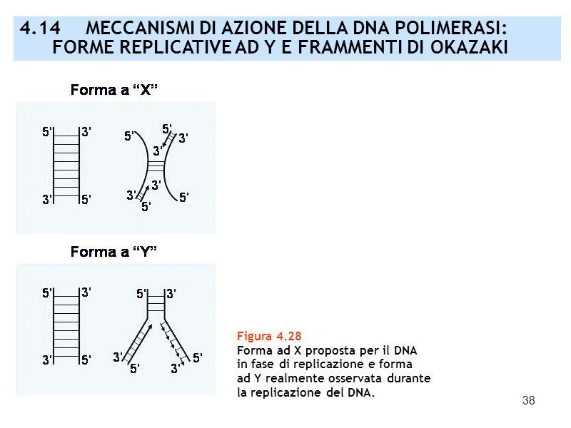 4. 14. MECCANISMI DI AZIONE DELLA DNA POLIMERASI: