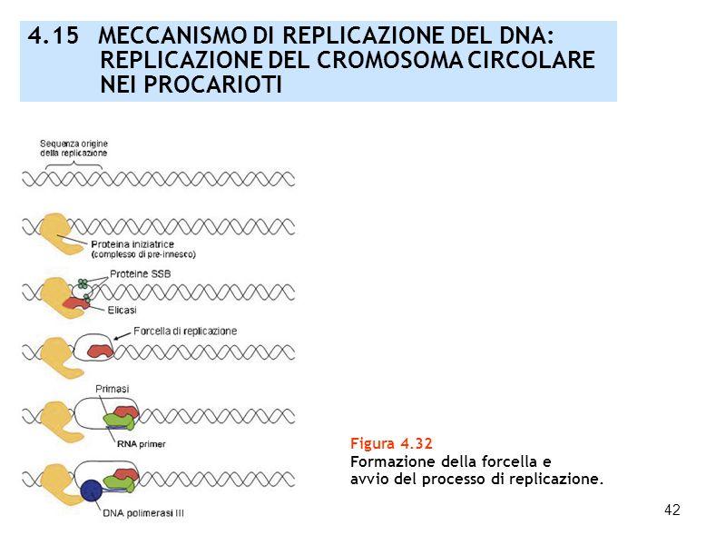 4.15 MECCANISMO DI REPLICAZIONE DEL DNA: