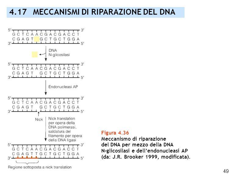 4.17 MECCANISMI DI RIPARAZIONE DEL DNA
