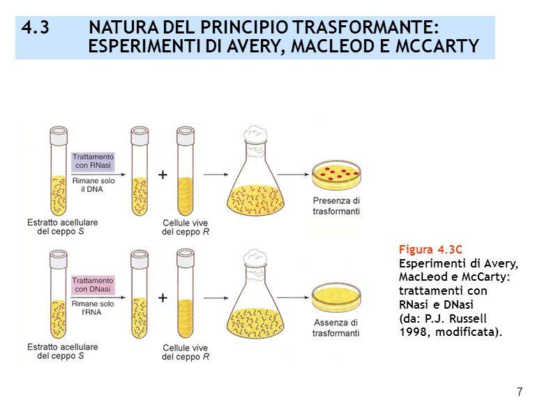 4.3 NATURA DEL PRINCIPIO TRASFORMANTE: