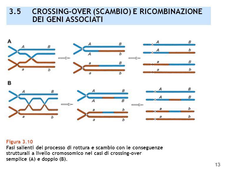 3.5 CROSSING-OVER (SCAMBIO) E RICOMBINAZIONE DEI GENI ASSOCIATI