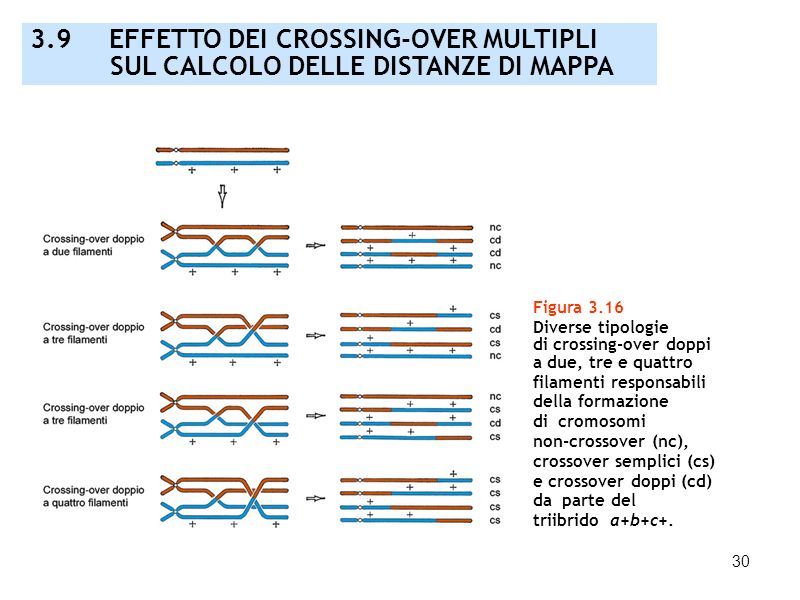 3.9 EFFETTO DEI CROSSING-OVER MULTIPLI