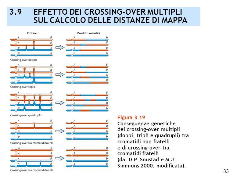 3.9 EFFETTO DEI CROSSING-OVER MULTIPLI