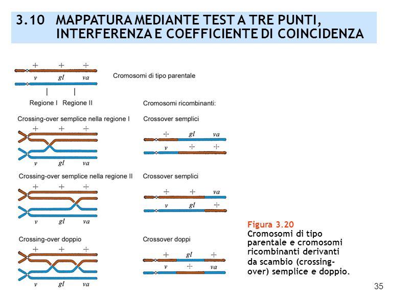 3.10 MAPPATURA MEDIANTE TEST A TRE PUNTI,