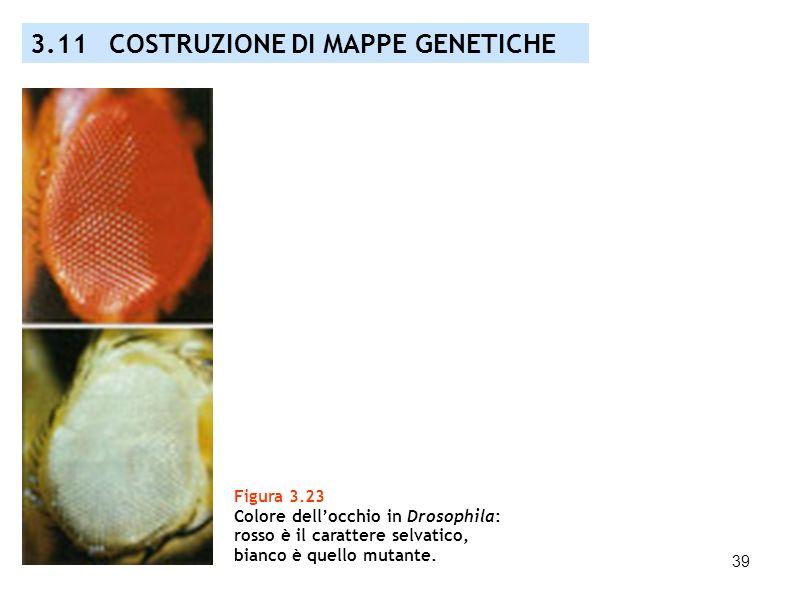3.11 COSTRUZIONE DI MAPPE GENETICHE