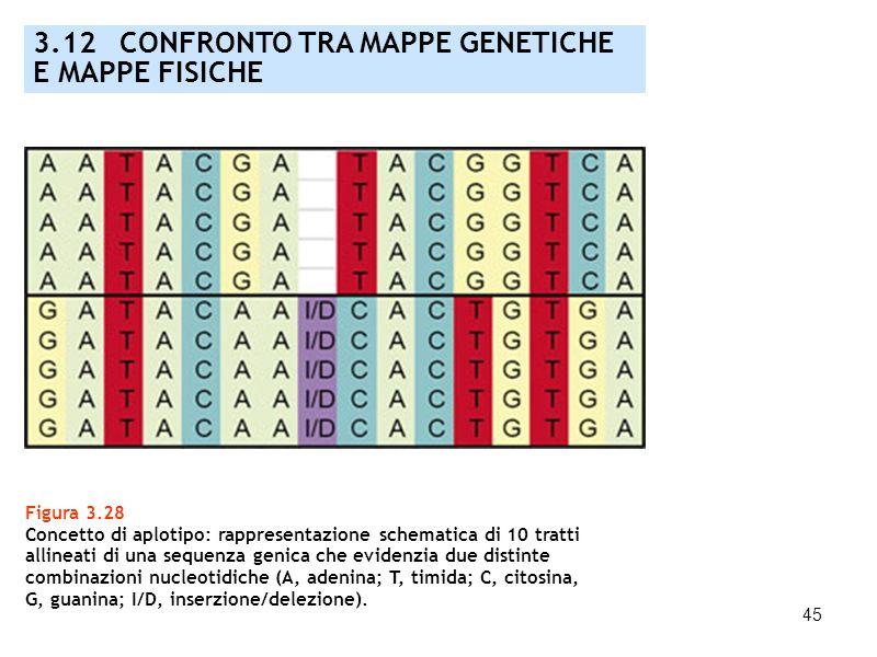 3.12 CONFRONTO TRA MAPPE GENETICHE E MAPPE FISICHE