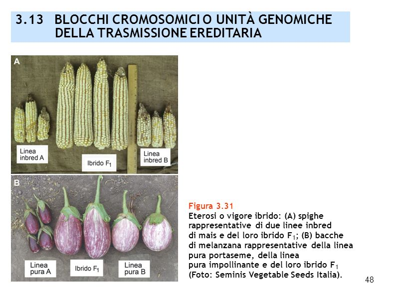 3.13 BLOCCHI CROMOSOMICI O UNITÀ GENOMICHE