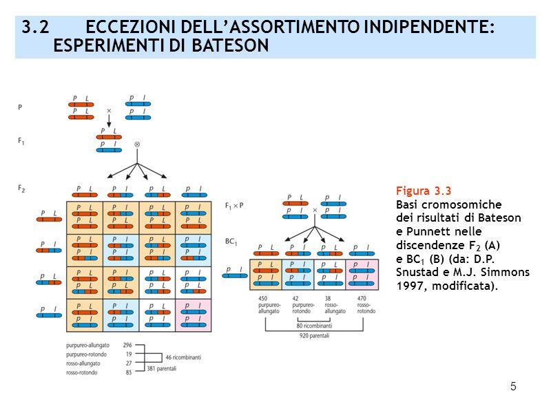3.2 ECCEZIONI DELL'ASSORTIMENTO INDIPENDENTE: ESPERIMENTI DI BATESON