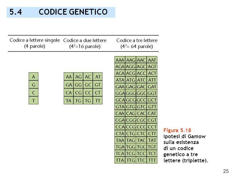 5.4 CODICE GENETICO Figura 5.18 Ipotesi di Gamow sulla esistenza