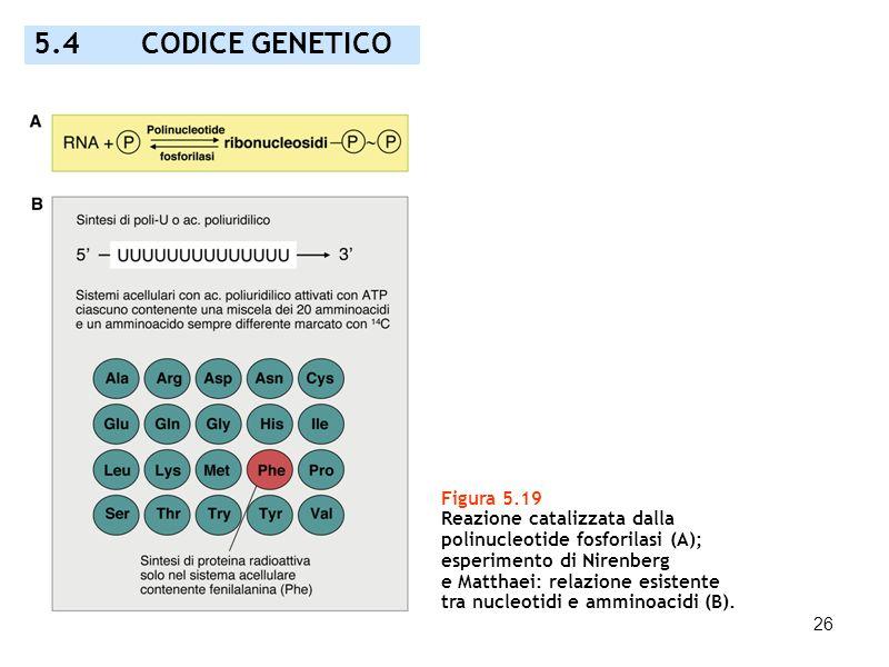 5.4 CODICE GENETICO Figura 5.19 Reazione catalizzata dalla