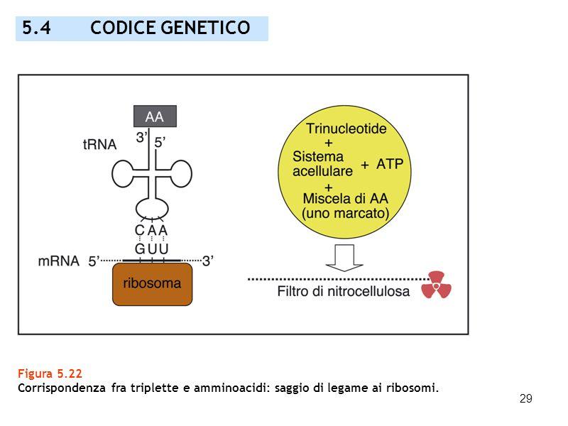 5.4 CODICE GENETICO Figura 5.22