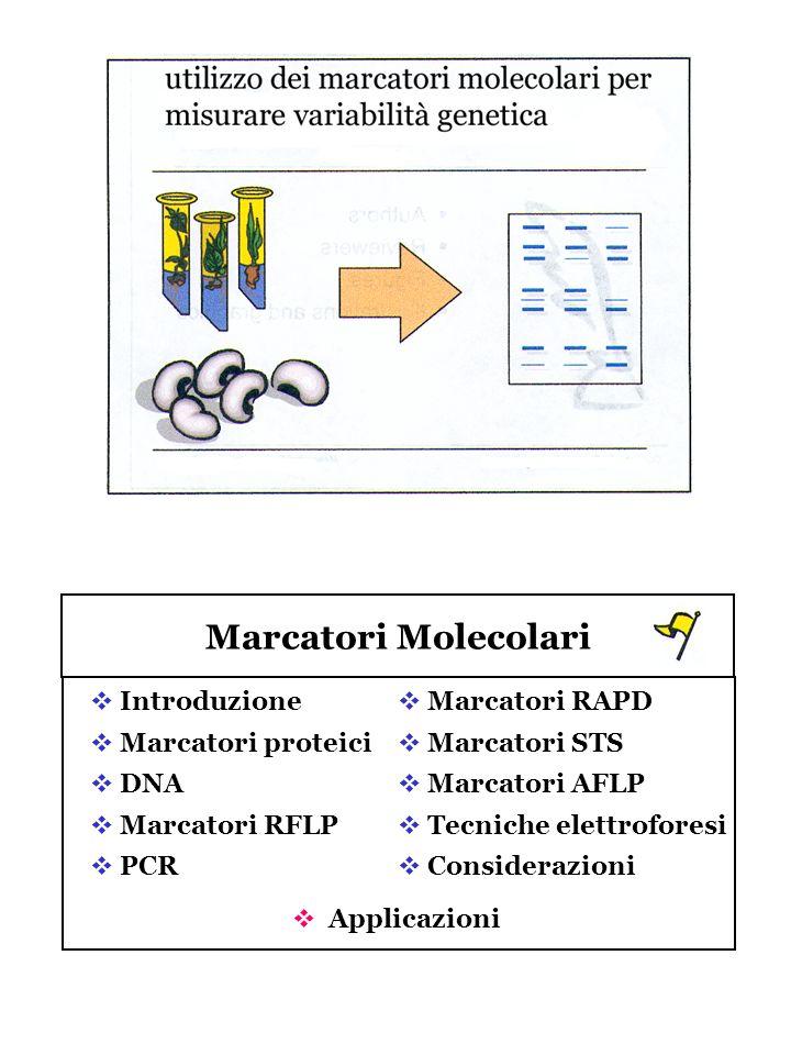 Marcatori Molecolari Introduzione Marcatori proteici DNA
