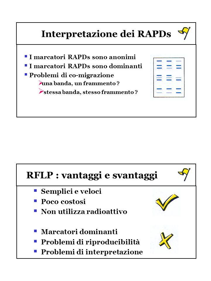 Interpretazione dei RAPDs