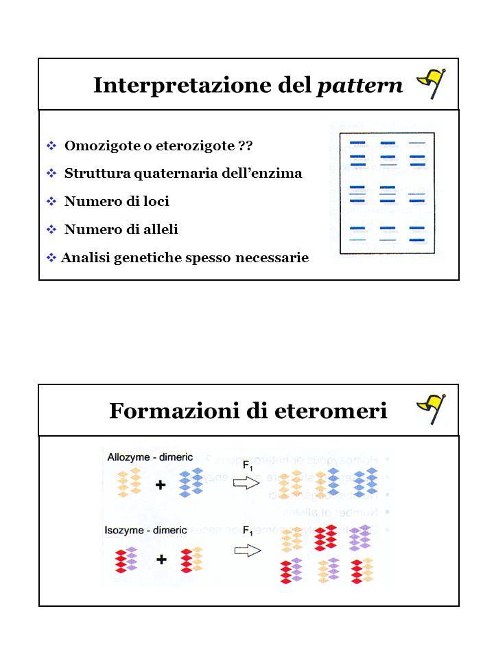 Interpretazione del pattern Formazioni di eteromeri