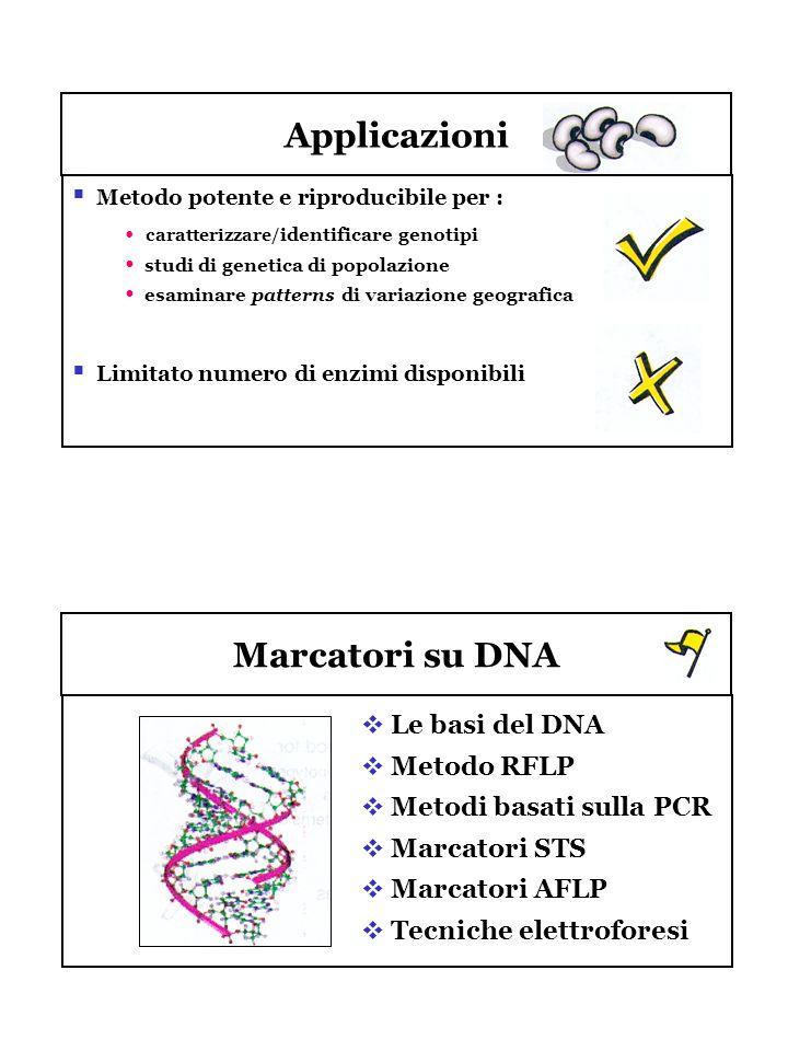 Applicazioni Marcatori su DNA