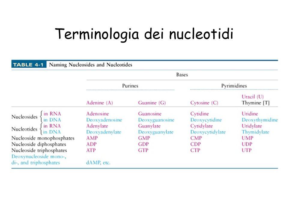 Terminologia dei nucleotidi