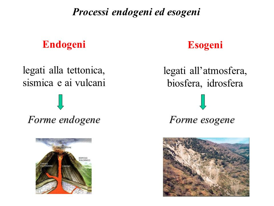 Processi endogeni ed esogeni