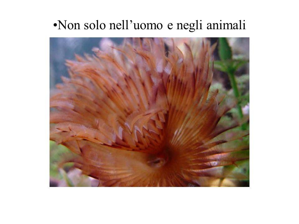 Non solo nell'uomo e negli animali