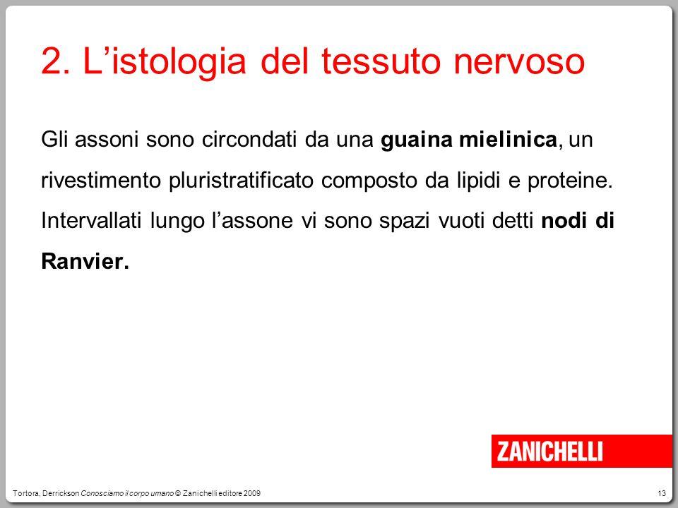 2. L'istologia del tessuto nervoso